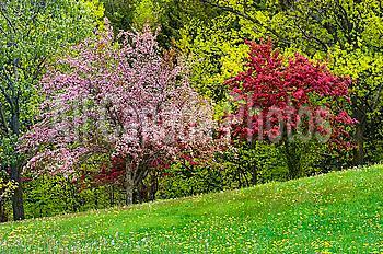 Spring blossoms in Kelso/Glen Eden Conservation Area along the Niagara Escarpment in Halton Region near Milton, Ontario, Canada.
