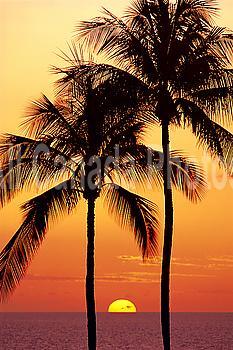 Hawaii, Big Island, Sunset with Coconut trees Kohala Coast, B1557