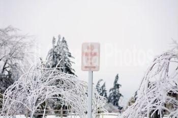 willamette valley, oregon, united states of america; a no parking sign covered in ice from a heavy ice storm