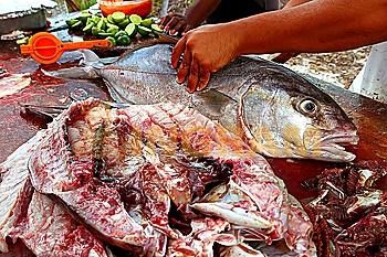 fishmonger hands preparing amberjack fish fillet on wood table