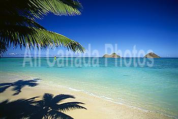Hawaii, Oahu, Lanikai beach, hobie cat sailing near Mokulua Islands, palms C1554