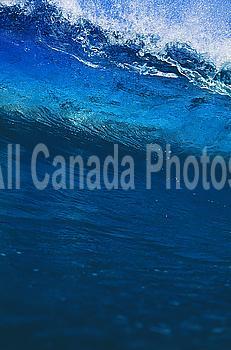 Hawaii, Big blue wave begins to crash.